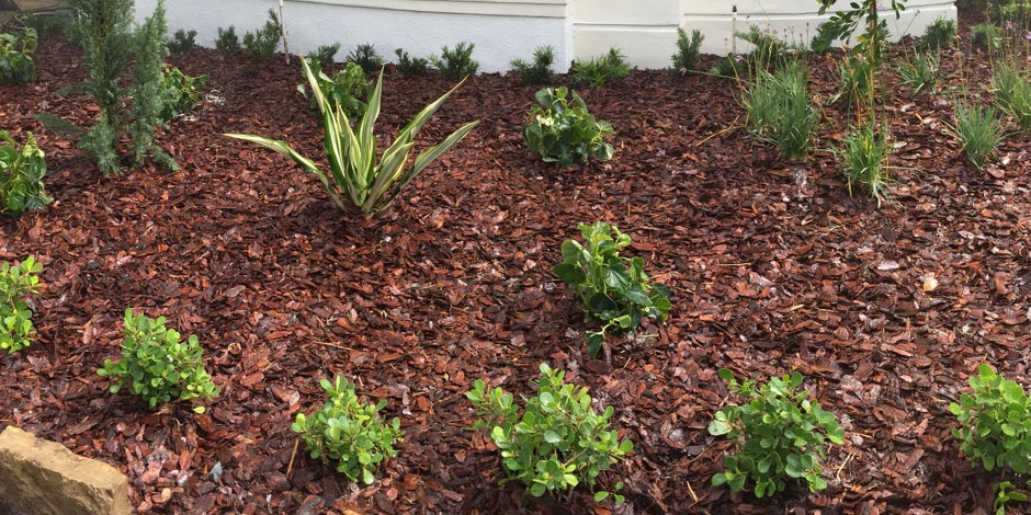Mulch vs rock for landscaping ground cover pink and green for Landscaping rocks broward county