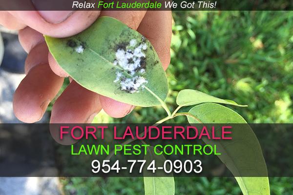 Fort Lauderdale Lawn Pest Control