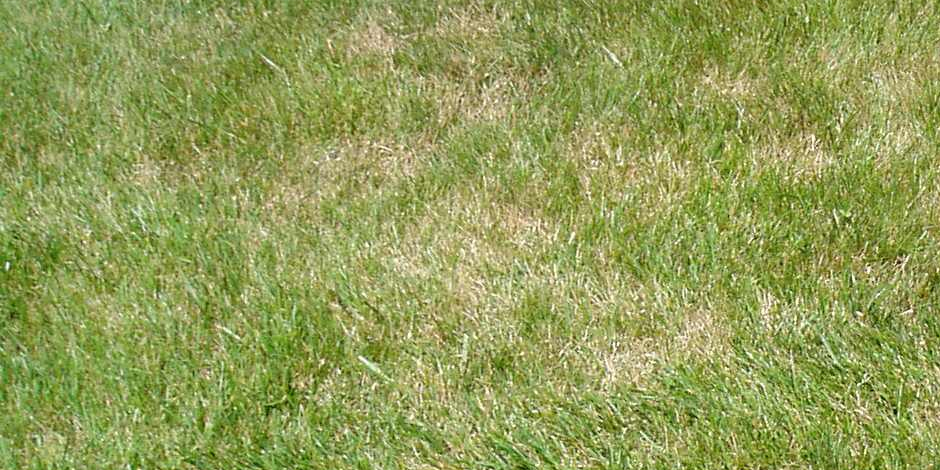Causes of a brown lawn