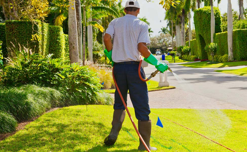 lawn pest control in South Florida