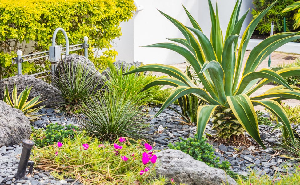 HOA Lawn and Landscape Maintenance South Florida