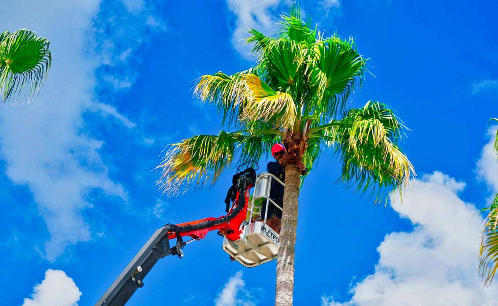 tree trimming companies south florida